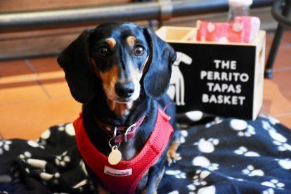 Tapas Brindisa Battersea Dog Friendly